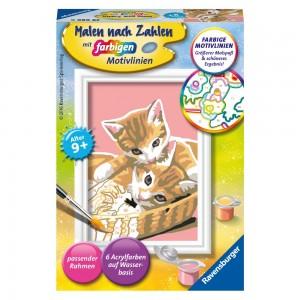 Katzenbabys MnZ Serie F